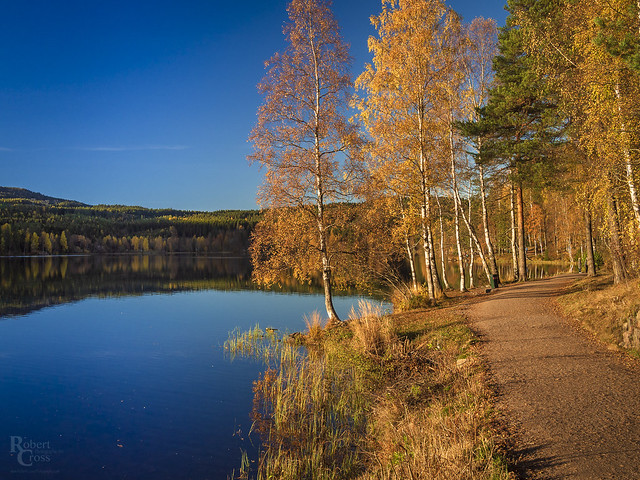 Sognsvann in Autumn