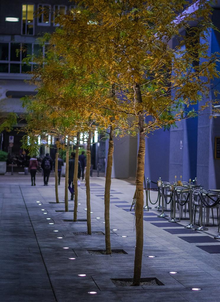 Great row of trees   DSC_0076