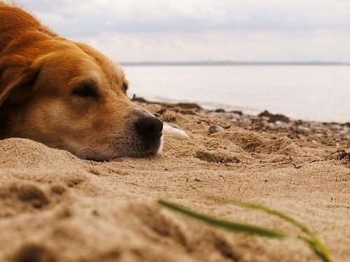Dog Beach Bokeh - Fehmarn - Schleswig-Holstein - Germany   by torstenbehrens