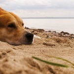 Dog Beach Bokeh - Fehmarn - Schleswig-Holstein - Germany