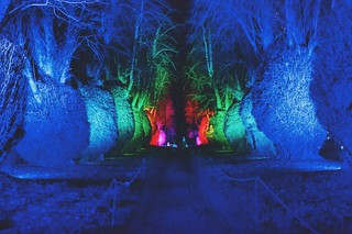 Illuminated gardens Kingston Lacy | by gallop080