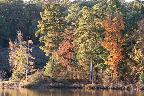 veteransday lakecrabtree autumnleaves northcarolina