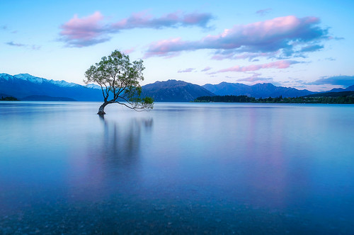 wanaka wanakalonetree lakewanaka reflection waterreflection sunrise travel landscape newzealand damienborel boblastic