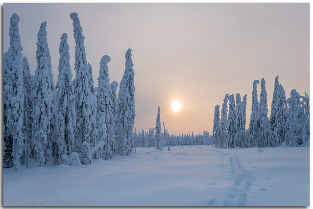 Winter wonderland - Tiilikka National Park