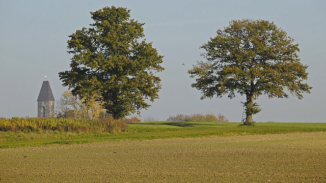 Two oak trees in the southern Muensterland with church spire and several birds