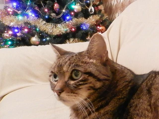 Luca cat- Luca cica