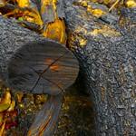 Charred Tree Limbs