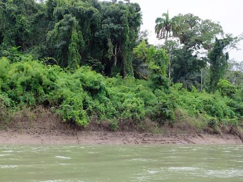 Traurige Regenwaldreste längs des Usumacinta, des Grenzfluss zwischen Guatemala und Mexiko
