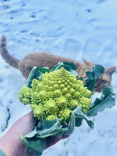 årstiderna organic vegan foodbox, food ambassador, january 2019 -