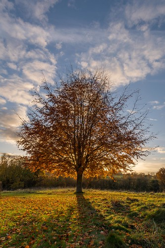 autumn goldenhour nikon d7100 maidstone tree tamron1024f3545diiivchld shadows kent motepark clouds england golden