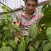 Vegetables - Organización: Vegetales Lencas (Honduras)