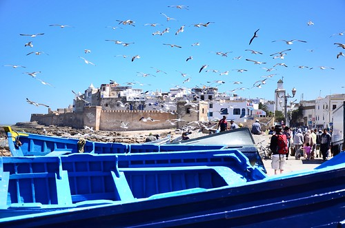 essaoira boats with gulls | by matthias317