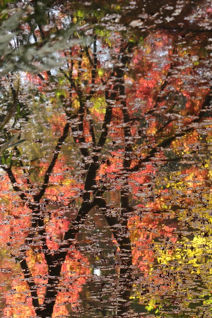 Reflection of Autumn Color