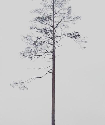 En hyllning till en november-tall | by magdalenasandberg