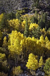 2018 Eastern Sierra Trip-950_(16x24)Print | by JamesDPhotographer