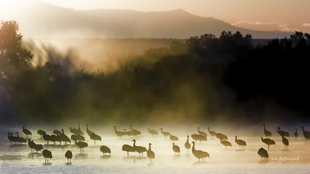 Morning mist, morning color