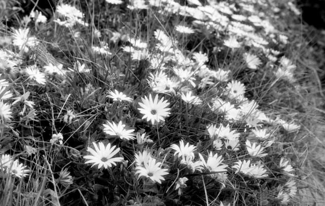 9354.Flowers