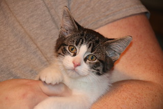Cats and Kittens at Crafty Cat Rescue (Ann Arbor, Michigan) - Wednesday December 12th, 2018 | by cseeman