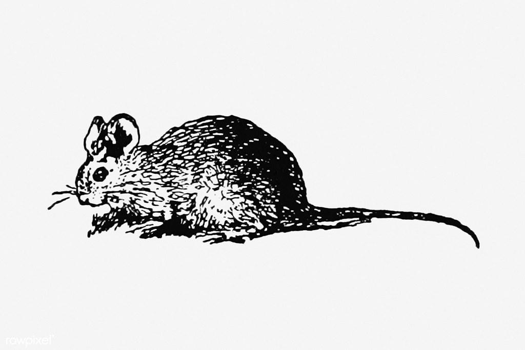 Vintage mouse illustration | Free download under CC Attribut