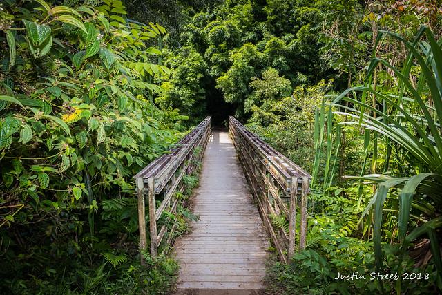 Pipiwai Trail Maui 2