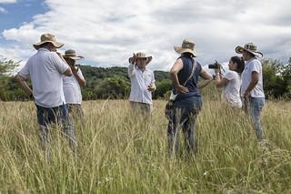 Proyecto: Desarrollo y uso de recursos forrajeros en sistemas sostenibles de producción bovina para el departamento del Cauca | by CIAT International Center for Tropical Agriculture