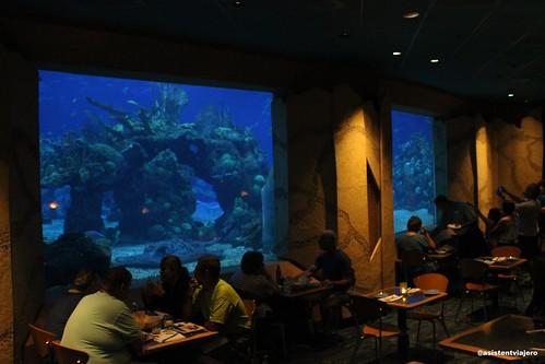 Coral Reef 4   by Asistente Viajero 2