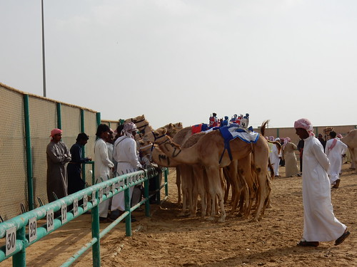 Al Marmoom Camel Racing Track - 14
