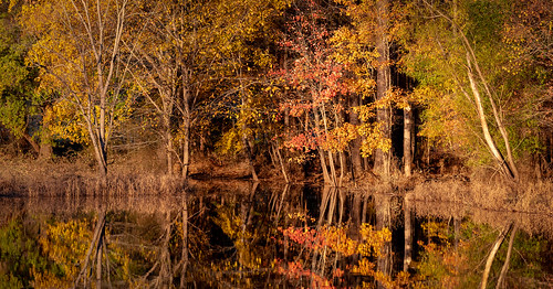 northcarolina bondpark landacape sunset cary fall