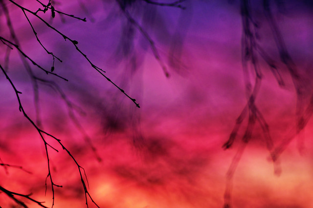 Branches and sunrise