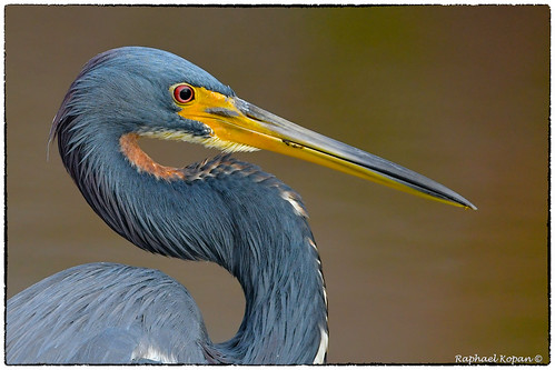 nealpreserve florida nikkor600f4evr 14xtciii nikon d500 raphaelkopanphotography wildlife