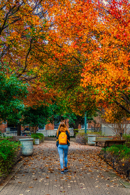Walking to Hughes-Trigg in the Fall