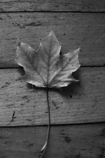 Leaf on Wood Floor