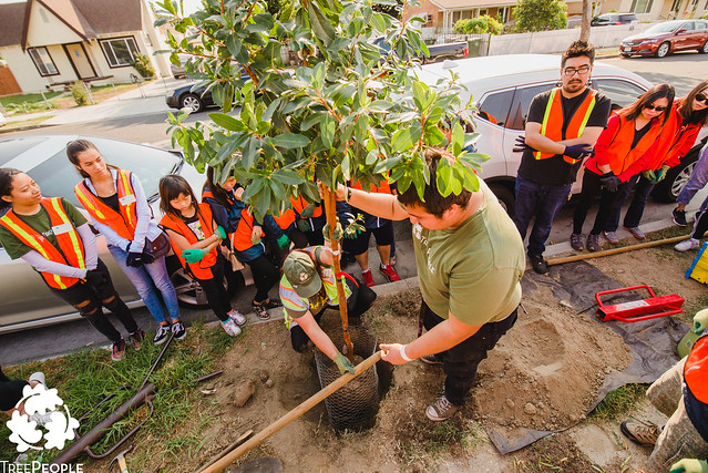 TreePeople Street Planting in Lynwood, California.