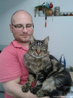 [Reunited] Fri, Jan 25th, 2019 Lost Male Cat - Hamlet Avenue, Balbriggan, Dublin