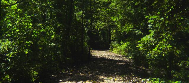 Holga Summer Path