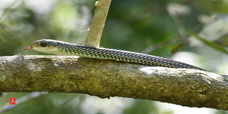 Snake_8846