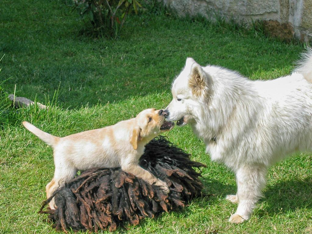 Mascotas, animales, bichos... que tanto nos gustan! - Página 7 45591625644_1b94156506_b