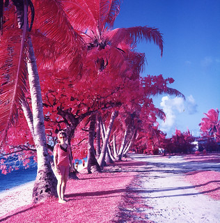 Red Palms | by TAZMPictures