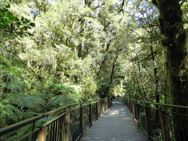 Mildford Sound (55)
