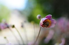 Bumblebee | Summer