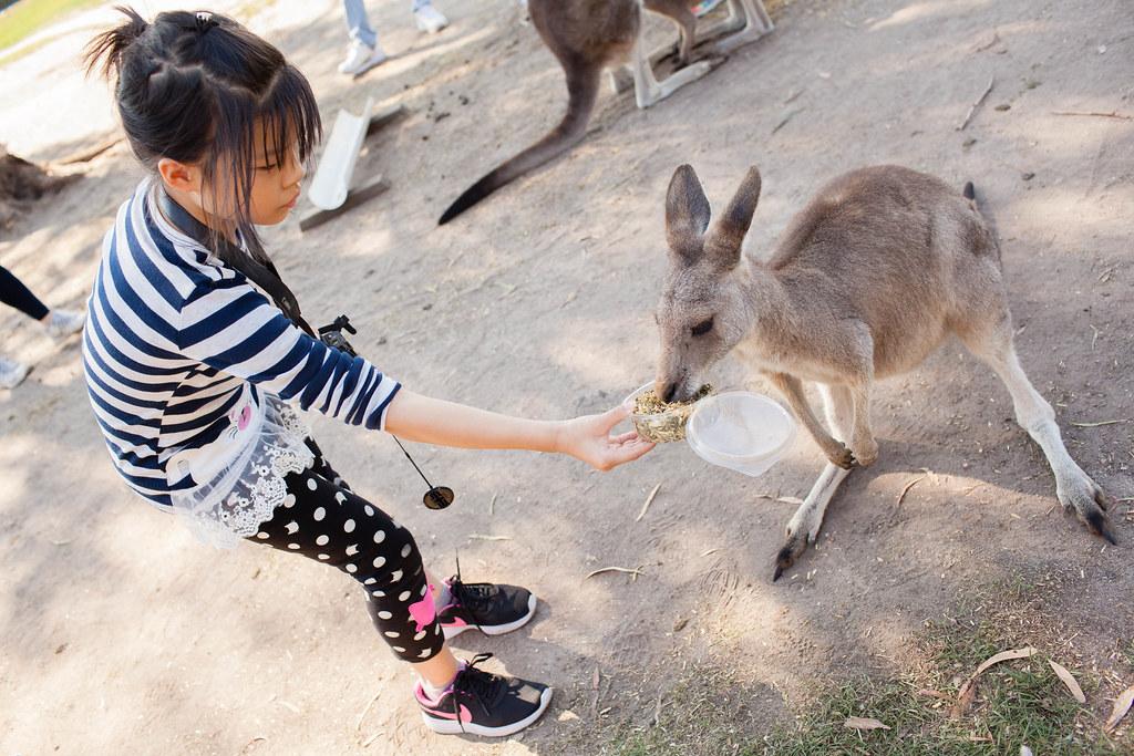 澳大利亞.墨爾本:Phillip Island