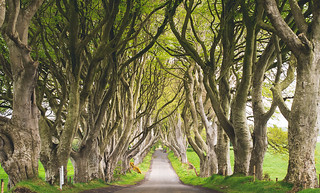 Dark Hedges | by valkyrieh116