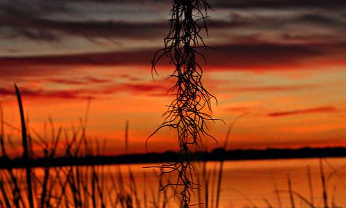 fisheyelens creative sunset afterglow weeds sunfilteringthruclouds fuzzy couds shoreline lakeariana lake polkcounty florida fl unitedstates usa us america auburndale lakeland acrossfrom1230arianaboulevard acrossfrom1230arianablvd landscape tangles tangledweeds