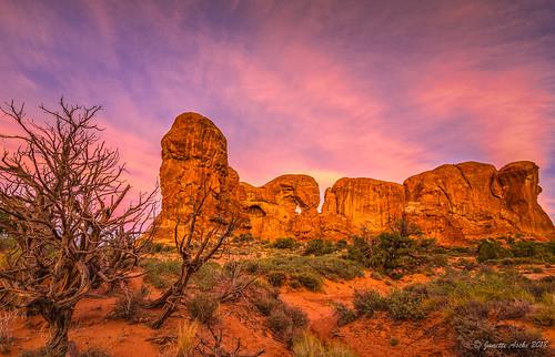 2017 archesnationalpark sonya7r usa utah windowsarea clouds junipertree landscape rocks sunrise travel