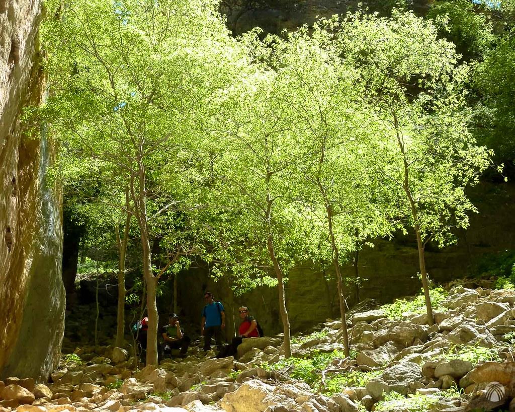 Bosque de almecinos o alatoneros