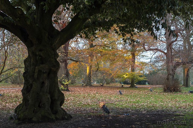 The Kew Gardens : Trees being practiced illuminated