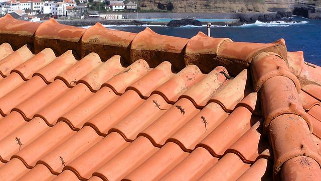 Echsen auf Hausdach