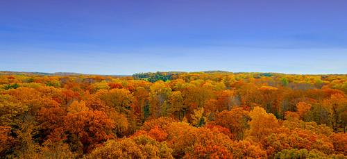 jeff® j3ffr3y copyright©byjeffreytaipale autumn autumnleaves color colorful trees sky season arboretum holdenarboretum ohio ohiopark