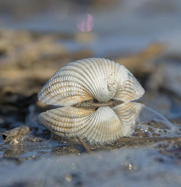 Morning Shell