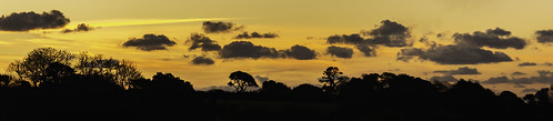 sunrise panorama orange trees clouds nikond5200 nikon d5200 chriswillis3 colour colours sky morning